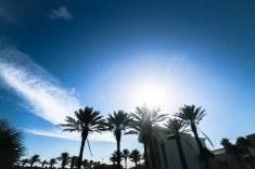 Palm trees in JAX beach